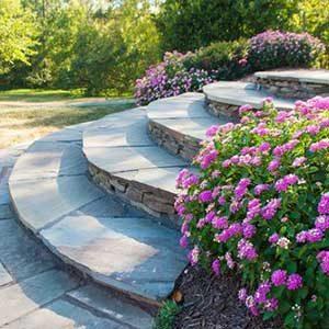 stone steps flowers